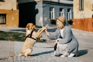 where to find a good dog walker